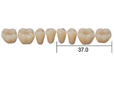 Posterior Synthetic Teeth